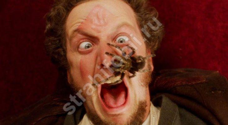 Как называется страх пауков
